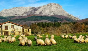 Queso y leche de oveja - Alimentación ecológica
