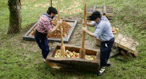 Sidra y alimentación ecológica